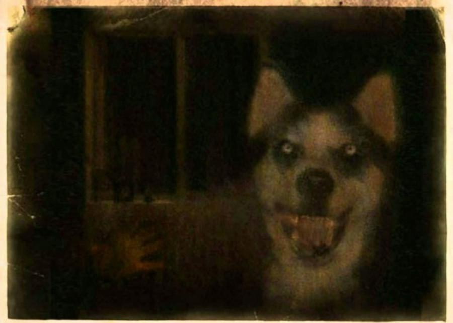 Őrületbe kergethet a mosolygós kutya képe