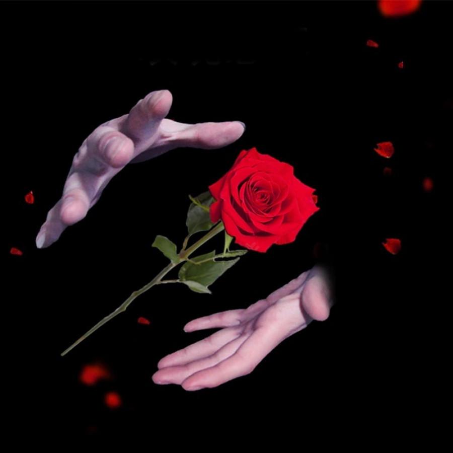Rózsavarázzsal kérhetsz támogatást a kapcsolatod ápolásához